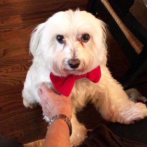 dog-bowtie-custom-name