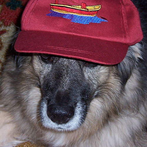 dog-in-embroidered-hat