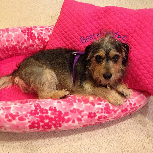 sadie-in-her-custom-dog-bed